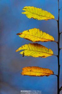 La bandera del otoño