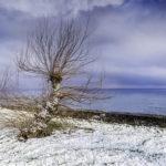 Cuando nieva al nivel del mar